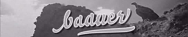 bauuer-copyright