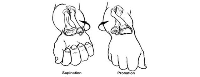 supination-pronation